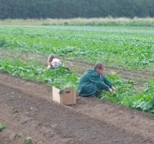 Gleaning Spinach