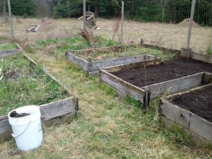 The garden beds after some work. The one on back still is fully covered with grass
