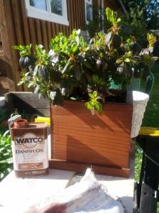 Cedar Planter with Danish oil