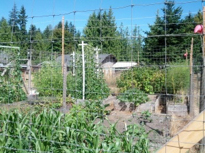 My garden today