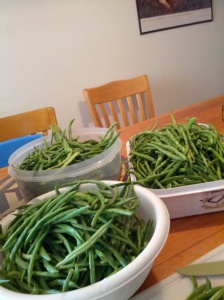 Cleaned Green Beans ready to be prepped
